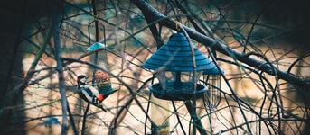 vogelhuisje-timmeren
